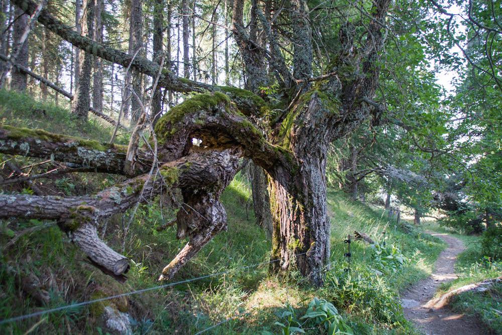 De drôles d'arbres