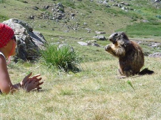 Marmotte au Saut du Layre