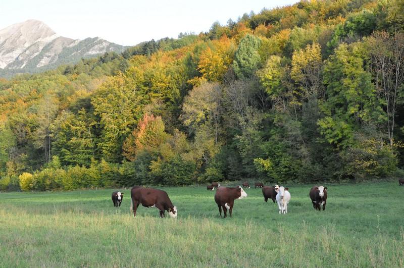 troupeau à l'automne.jpg